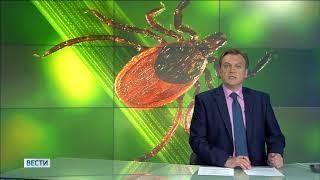 Стало известно, где в Башкирии больше всего обитает инфицированных клещей