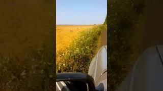 Гибель пчел в Стерлитамакском районе