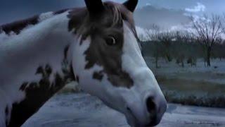 Самая Быстрая Лошадь в Мире ✦ Fastest horse in the world ✦ LUCKY