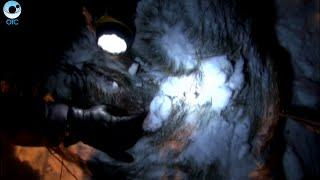 """Миллионный штраф грозит браконьерам, застрелившим лосей на территории заказника """"Кирзинский"""""""