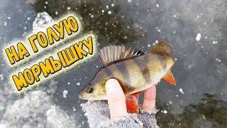 Первый лед и окушки - открытие сезона зимней рыбалки 2018-2019