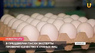 Новости UTV. Эксперты проверят качество продаваемых куриных яиц