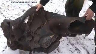Около села Старые Киешки Кармаскалинского района нашли череп Мамонта