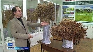 Башкирские ученые вывели новый сорт клевера, устойчивый к засухе и большинству болезней