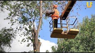 Новости UTV. В Салавате срубают старые и аварийные деревья