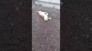 В Буздякском районе рысь напала на мужчину (29.04.19)