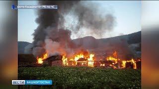 Крупный пожар в Башкирии уничтожил сразу несколько подворий