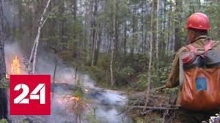 Цена бездействия: Минприроды пересмотрит границы зон контроля лесных пожаров - Россия 24