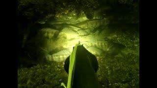 Зимняя подводная охота: отличный улов и новый трофей!