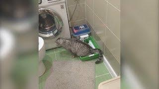 Уфимец изобрел самоочищающийся лоток для кота