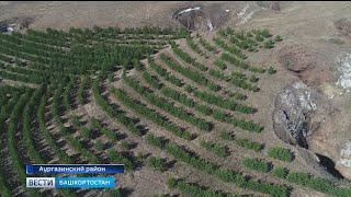 Как восстанавливают башкирский лес – специальный репортаж «Вестей»