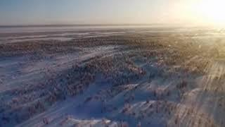 Нашествие волков в калужской области