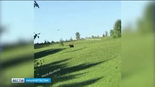 В Башкирии очевидцы сняли на камеру любопытного медвежонка