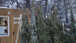 UTV. В Башкирии упал спрос на живые новогодние ели. Жители республики стали осознаннее