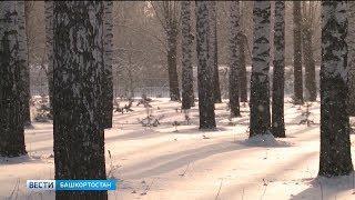 Росгидромет опубликовал прогноз на предстоящую зиму в Башкирии