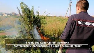 UTV. Новости севера Башкирии за 6 июня (Бирск, Мишкино, Бураево, Краснохолмский, Караидель, Калтасы)