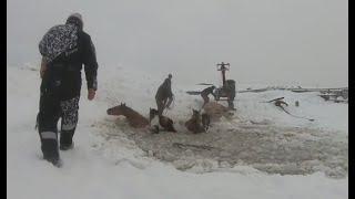 Стадо лошадей провалилось под лед в Иглинском районе