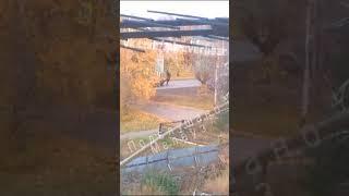 Мелеузовского верблюда сбила машина