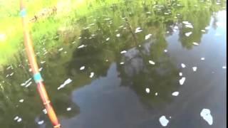 Рыбалка на Урале и в Башкирии. Ловля голавля на Сакмаре тенкара