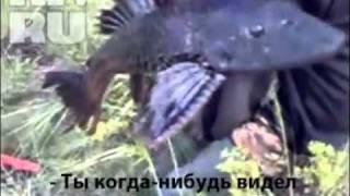KP.RU - Уфа : Амазонская рыба : ФВ