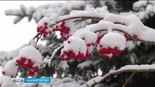 В первый зимний месяц в республику придёт аномальное тепло и влажный черноморский воздух
