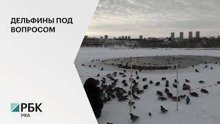 Р. Хабиров раскритиковал обсуждение проекта строительства экоцентра с «дельфинотерапией» в Уфе
