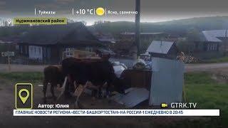 В одной из деревень Башкирии коровы едят из мусорных баков