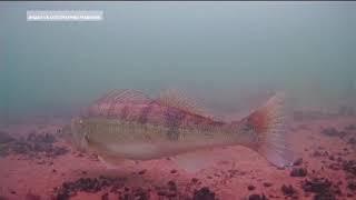 Удивительная красота: дайверы сняли на видео подводный мир одной из рек Башкирии