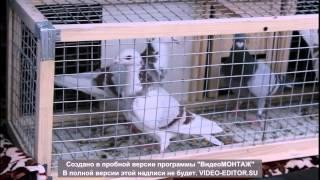 Ярмарка голубей РБ г. Октябрьский 15.03.14