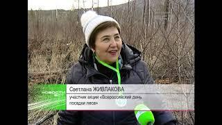 Более двух сотен братчан приняли участие во всероссийской акции по посадке леса