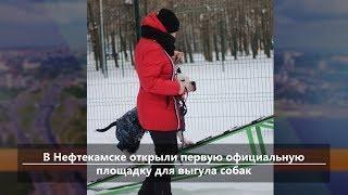 Новости севера Башкирии за 21 января (Нефтекамск, Дюртюли, Янаул, Татышлы, Верхнеяркеево)