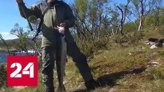 Убить их всех. Экологи призвали очистить норвежские реки от российской горбуши - Россия 24