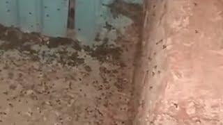 Нашествие насекомых в Туймазах