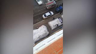 Метнула кота в лося  Башкирия  Новости