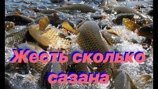 Огромная стая сазана.Подводная охота в Башкирии зимой. Кармановское водохранилище.Амуры подрастают.