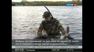 Подводная охота. В Башкирии найден бивень мамонта