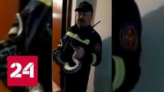 Многодетная мать из Перми обнаружила в своем туалете полутораметровую змею - Россия 24