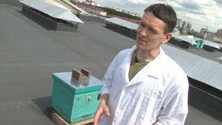 Уфимец создал чудо-витамины для пчёл