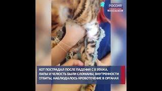 В Башкирии ветеринары собрали по частям  кота: есть видео