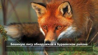 UTV.Новости севера Башкирии за 9 июля (Бирск, Мишкино, Бураево)