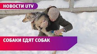 «Собачий концлагерь». Телеканал UTV побывал в приюте, где голодные псы едят друг друга