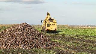 Урожай сахарной свеклы в этом году превысил ожидания башкирских аграриев