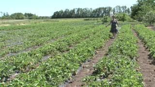 «Сельский порядок». Кочевая пасека: в чем преимущества? (10.06.2015)