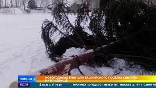 Жителям Стерлитамака Новогоднюю елку привезли с кладбища