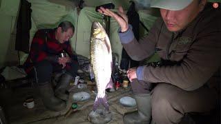 Новогодний УЛОВ Дмитрича! Рыбалка 2020