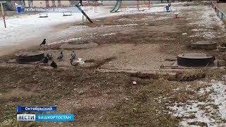 В Октябрьском сняли на видео крысу, которая ворует еду у голубей
