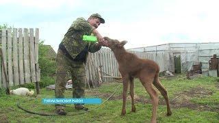 Житель Туймазинского района спас месячного лосёнка