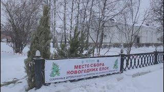 Новости UTV. Сбор елок в Салавате