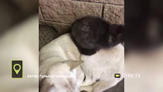 Брошенные на улице в Башкирии кошки и собака вместе переживают зиму - видео