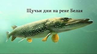 Рыбалка. Щучьи дни на реке Белая.  троллинг.